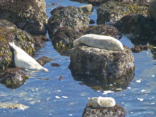 Seals soaking up the sun